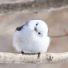 Pretty Birds, Beautiful Birds, Animals Beautiful, Cute Funny Animals, Cute Baby Animals, Animals And Pets, Regard Animal, Birds For Sale, Baby Animal Videos