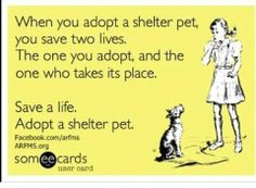 When you adopt a shelter pet, you save two lives.  The one you adopt, and the one who takes its place!