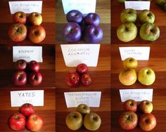 2008 spring, summer, heritage apple varieties