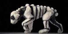 Dogs - author Lewis Blackwell Photographer - Tim Flach  fine art book