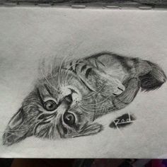 Graphite cat by Rod