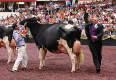 Champion! This was at World Dairy Expo!