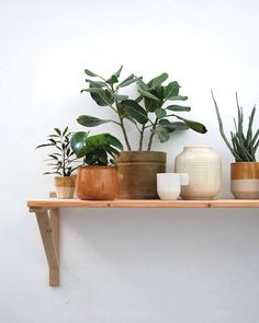 Plants in ceramic pots -- fun collected look