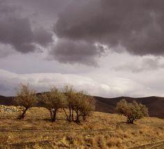 درخت سنجد با پوستی تیره، در بین سایر گیاهان منطقه کوهستانی الوند از ویژگیهای برجسته ای برخوردار است که به عنوان نشانه هویتی و شاخصه بارز همدان عمل می کند. Cover Photos, Vineyard, Country Roads, Iran, Landscape, Outdoor, Outdoors, Scenery, Vine Yard