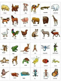 Animals- Aprende Ingles
