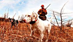 setter Cow, Animals, Animales, Animaux, Animal Memes, Animal, Animais, Dieren