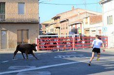 Santacara: Vacas Hermanos Ganuza (Santacara Año 2019) Street View, August 17, Cows, Siblings