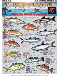 Saltwater Fishing Charts and Saltwater Fish Identification Charts and Great Tech. - Saltwater Fishing Charts and Saltwater Fish Identification Charts and Great Techniques for catching - Trout Fishing Tips, Fishing Rigs, Salmon Fishing, Sea Fishing, Fishing Bait, Saltwater Fishing, Fishing Stuff, Sport Fishing, Pheasant Hunting