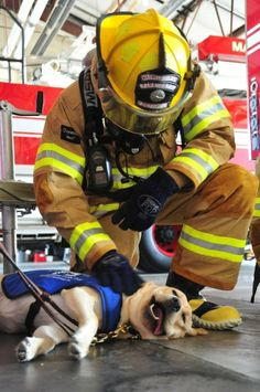 A happy service dog meeting a firefighter | Shared by LION
