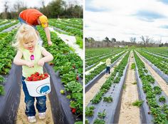 Froberg's Strawberry Farm in Alvin, Texas. One of my niece Vivian's favorite places! And simply fabulous produce and food.