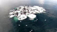 Dieses Boot landet inmitten einer Herde von Buckelwalen! Hier, die Reaktion der Leute und das unglaublich spannende Jagdverhalten der Wale.