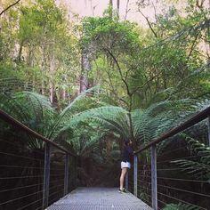 Short escape // adventure time  @timm.meee  #yesterday #roadtrip #anzacday #longweekend #explore @visitmelbourne #lush #green #nature #escape #me #nike #airmax #bridge #landscape #outdoors #lorne #otways #victoria #australia #rainforest #ferns by bphoo.x_ http://ift.tt/1IIGiLS