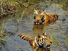 Manindra Kr Bhuyan - Google+