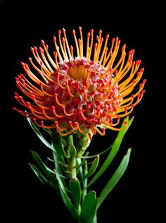 Terrific Screen Exotic Flowers aesthetic Suggestions Community bouquets in addition to vegetation could be a great accessory for any office environment or kitchen