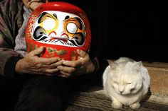 Miyoko Ihara has been taking photographs of her grandmother, Misao and her beloved cat Fukumaru since their relationship began in 2003. Their closeness has been captured through a series of lovely photographs. 1-08-13 / Miyoko Ihara