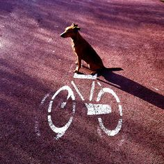 Ook leuk!   71 Hop on your bike  PHOTOGRAPH   Signed and Numbered  by edart, $18.00