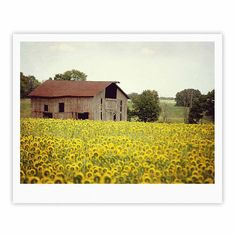 "Angie Turner ""Field Of Sunflowers"" Yellow Nature Fine Art Gallery Print"