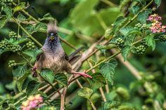 Потрясающие фотографии птиц с фотоконкурса «Audubon Photography Awards 2016″ — Фотоискусство