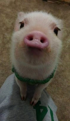 Pigs can be cute too!