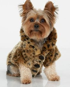 ShopStyle: Juicy Couture Leopard-Print Dog Coat - My dog is a Silky like this one...would look so cute!!