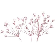 granny art baby's breath ❤ liked on Polyvore featuring flowers, plants, fillers, backgrounds and nature