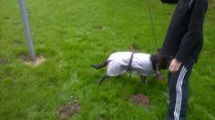 reflective waterproof dog coats