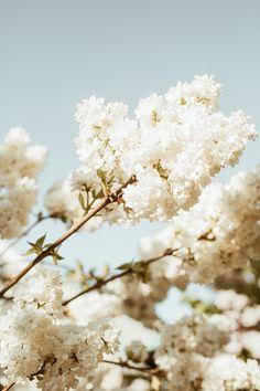 Photo of the week by maximleshkovich. #lookslikefilm #filmphotography #whitelilac