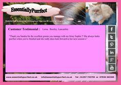 Customer Testimonial of EssentiallyPurrfect #mobile #Persian #cat #catgrooming service. Lorna #Burnley #Lancashire