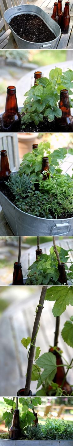 How to Plant a Beer Garden Brew up this clever container garden featuring plants used in the beer-making process. You can get the materials from : amazon....