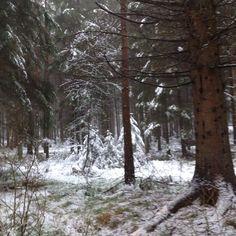Tre små granar i Bokedalsskogen i Kåhög/Jonsered