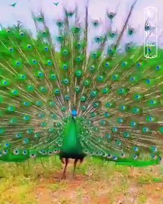 Very Beautiful Animal That I Never Seen. 82 comments on LinkedIn Beautiful Horses, Beautiful Birds, Animals Beautiful, Funny Animal Videos, Funny Animals, Cute Animals, Exotic Birds, Colorful Birds, Exotic Pets