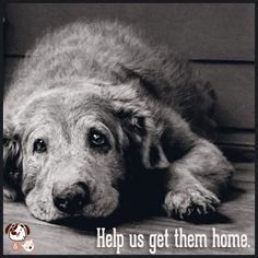 There's something about an elderly dog.  At the home office of CharlieDog and Friends, all our guys are old, old, old.  And that's the way we like it!  www.charliedogandfriends.com