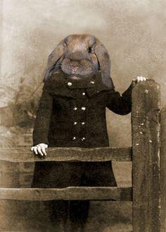 Anthropomorphic rabbit | Rabbit / Phoebe 5x7 Vintage Rabbit Print - Anthropomorphic -