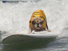 Neste domingo, foi realizada a sétima edição de um campeonato de surfe para cachorros nos Estados Unidos. Betsy foi uma das participantes   Foto: EFE