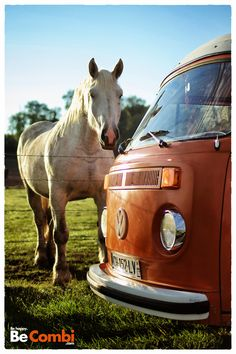 Combi VW and white horse ? What else...