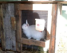 Now you are currently watching the result of DIY Wooden Pallet Rabbit Hutch. You can see here a Pallet Storage Chest. A hutch for rabbits is called DIY Wooden Rabbit Hutch Plans, Rabbit Hutches, Raising Rabbits For Meat, Meat Rabbits, Free Rabbits, Bunny Hutch, Rabbit Breeds, Rabbit Run, Free Pallets