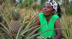 Pineapple Benefits, Female Farmer, Business Women, Christmas Gifts, Farmers, Fields, Blog, Success, Image