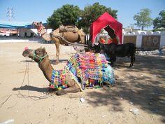 marché aux chameaux, Pushkar photo personnelle