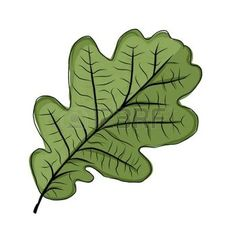 hojas de otoño dibujo: El roble de hoja verde, bosquejo para su diseño Vectores