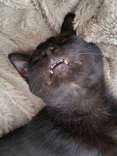 Sharp stinky white kitty teeth!!!!!♡