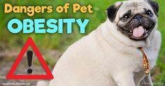 If your pet has one or more of these conditions and is also obese, there is very likely a connection between his weight and his suffering. http://healthypets.mercola.com/sites/healthypets/archive/2017/04/14/obesity-related-pet-diseases.aspx