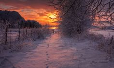 ***Winter sunrise by Rune Askeland (Norway) Animal Tracks, Landscape Pictures, Nice Landscape, Snowy Day, Winter Solstice, Cool Landscapes, Runes, Winter Wonderland, Art Photography