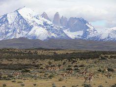 Torres del Paine con guanacos al sur de Chile