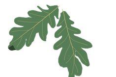 Kuvahaun tulos haulle OAK LEAVES Oak Leaves, Plant Leaves, Plants, Oak Leaf Cluster, Plant, Planets