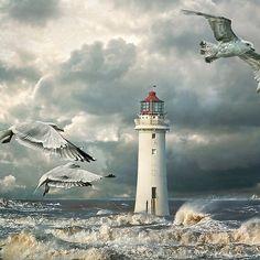 inhasa:  Gulls at Perch Rock