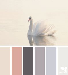 { swan tones } ➸ | Design Seeds
