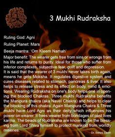 3 Mukhi Rudraksha