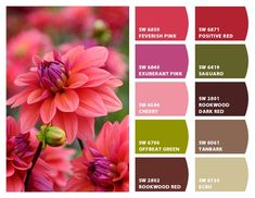 ColorSnap by Sherwin-Williams – ColorSnap by cintia a. Hex Codes, Hex Color Codes, Colour Schemes, Color Combinations, Website Color Themes, Bedroom 2018, Sherwin William Paint, Color Meanings, Color Psychology