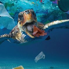 This year we had an epiphany: our lives and the planet are literally filling up with plastic. Water Pollution Facts, Ocean Pollution, Plastic Pollution, Environmental Posters, Environmental Pollution, Environmental Issues, 4 Oceans, Save Our Oceans, Save Our Earth