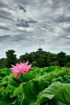 pop of color~ Yokohama Sankeien Garden, Japan 三渓園 Beautiful Places In Japan, Beautiful World, Places Around The World, Around The Worlds, Zen, Beau Site, Yokohama, Water Lilies, Japanese Culture